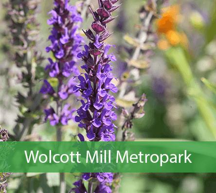 Wolcott Mill Metropark