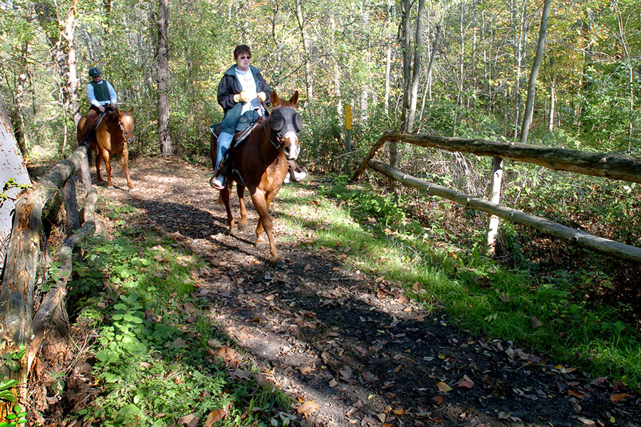 Wolcott Mill Equestrian TrailsRay, MI